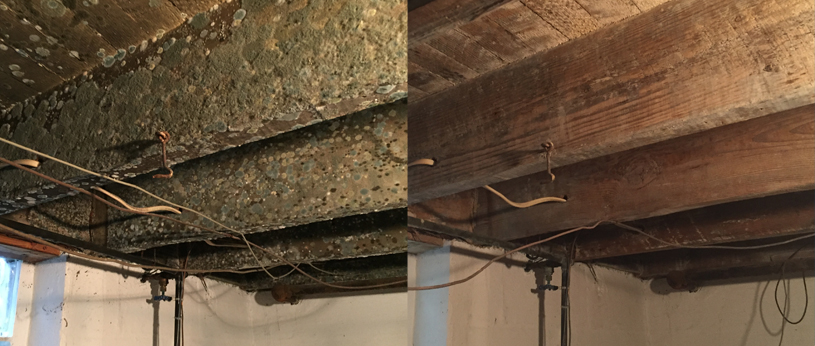 before and after of mold on wooden beams in a basement